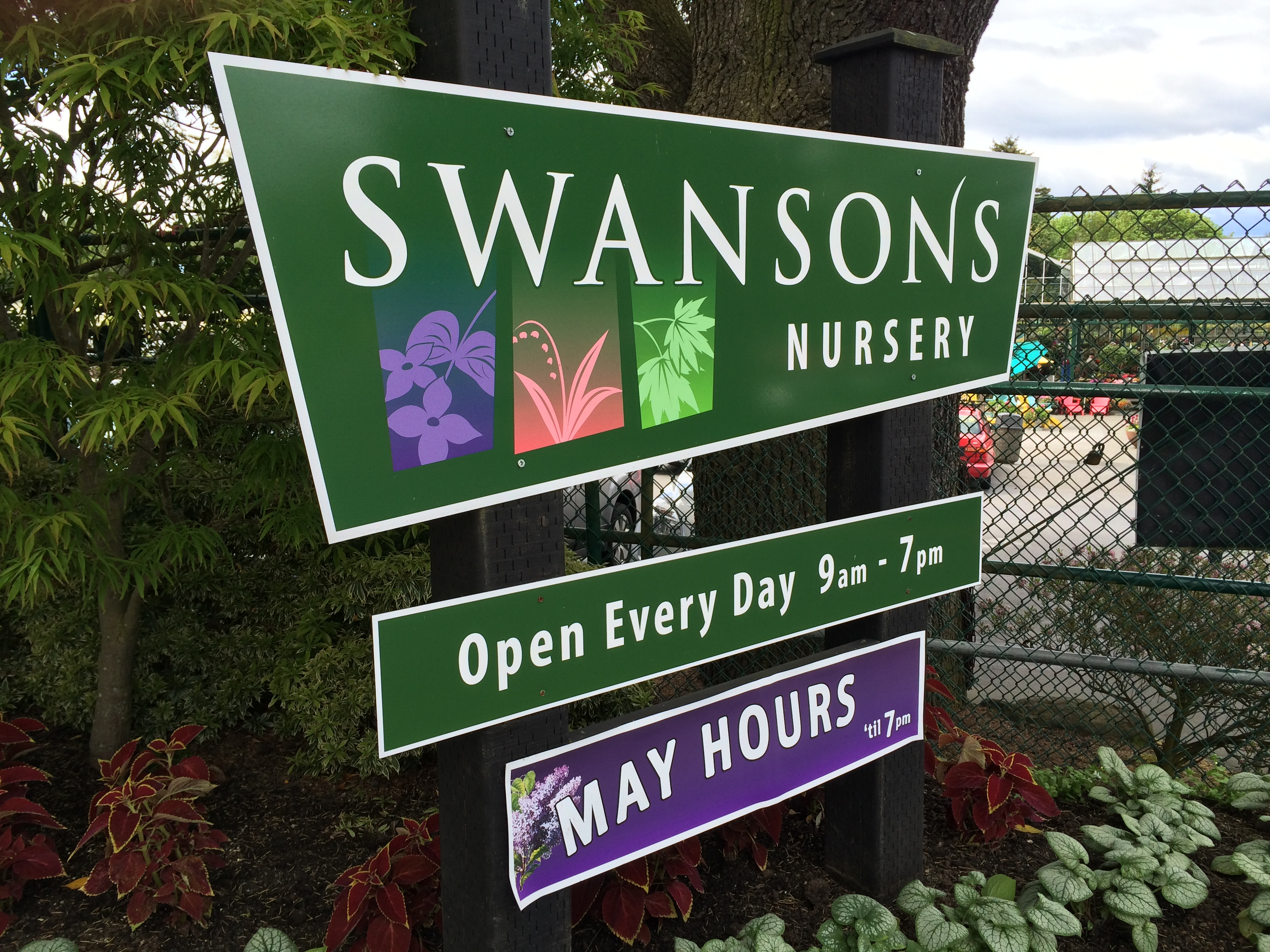 Blue Ridge – Swansons Nursery